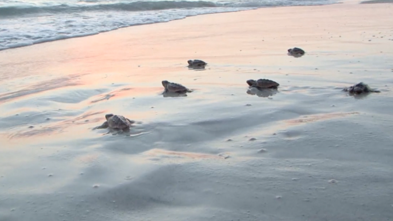 turtle-mote-marine.png