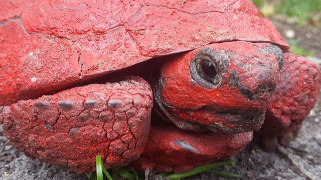 Spray-painted Florida tortoise cleaned up, healing