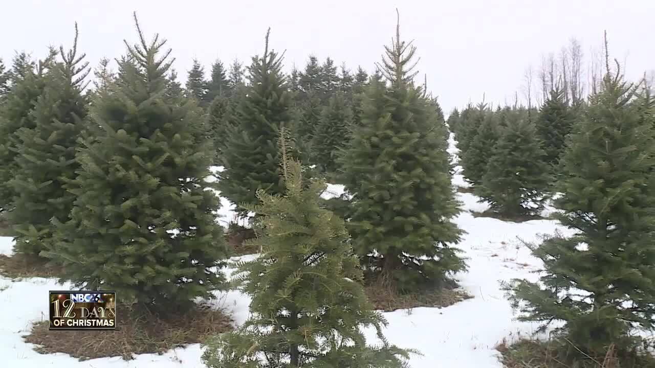 Christmas Tree Farm Photos.12 Days Of Christmas Family Christmas Tree Farm