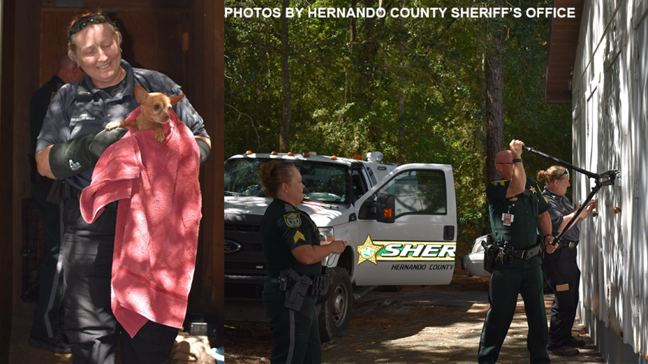 Florida deputies free several dogs locked inside self-storage unit