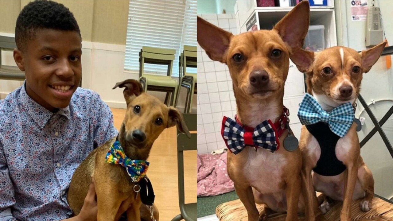 dogs with bow ties.jpg