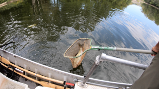 Invasive fish species are a problem in northeast Ohio waters