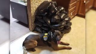 362 pounds of meth — valued at $4M — seized during traffic stop