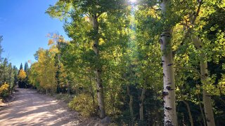 2020 aspens_Colorado Parks and Wildlife NE Region