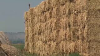 Drought continues, causes sky rocket in hay prices