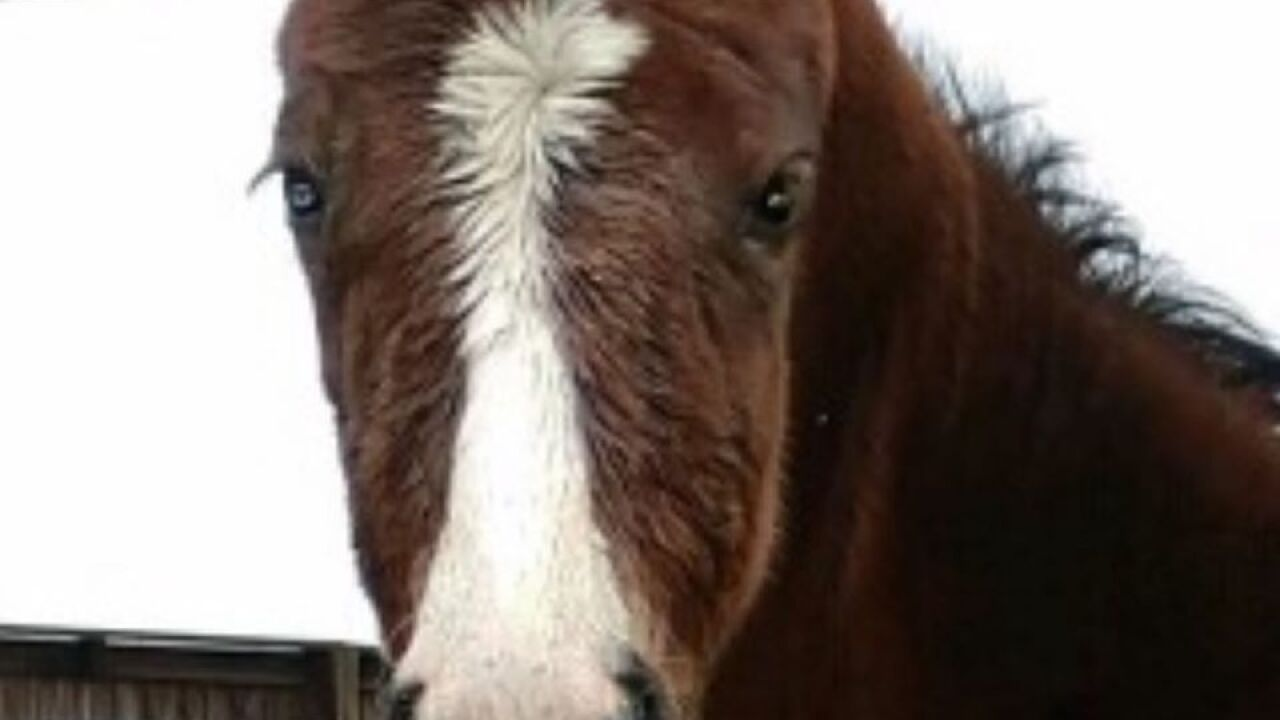 Foal 2.jpg