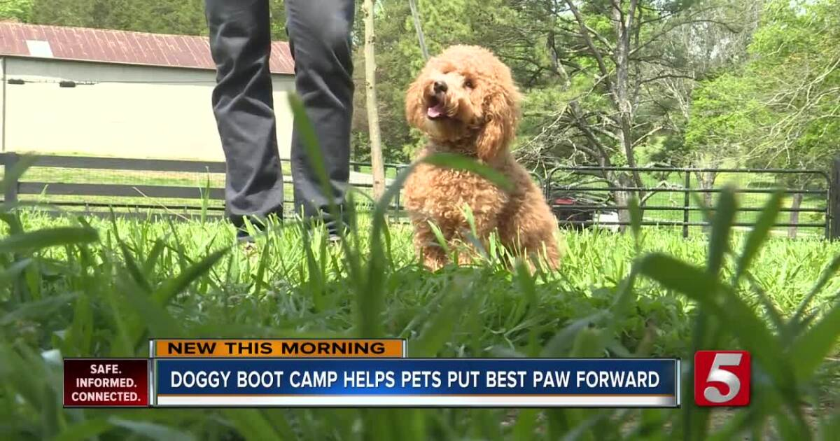 'Dog boot camp' can improve your puppy's behavior and mood