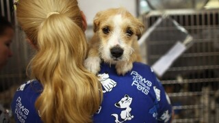 Kern County Animal Services warns about potential dog flu epidemic