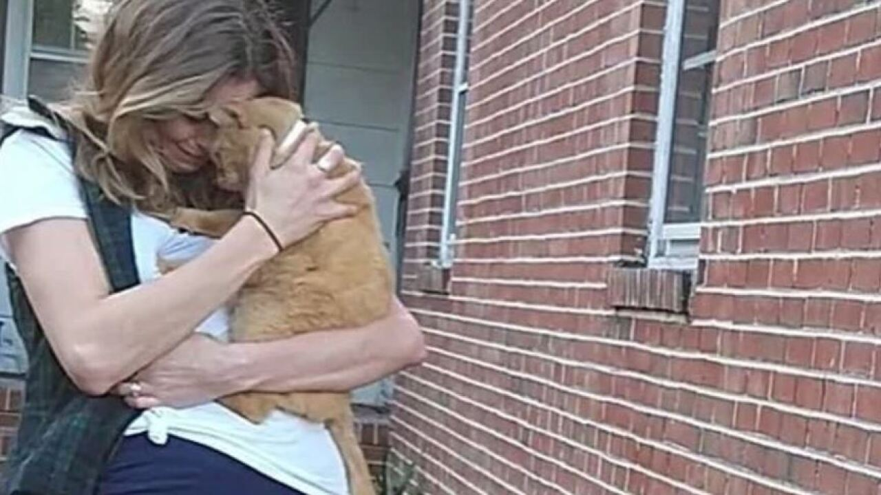 Hampton pet owner reunited with cat more than a year after it disappeared