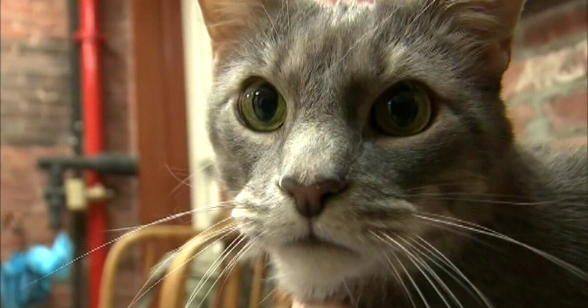 Local vet shares what you should know about pets and coronavirus