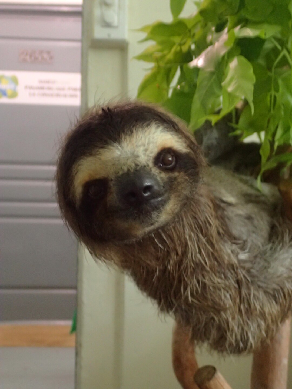 Baby Sloths (9).JPG