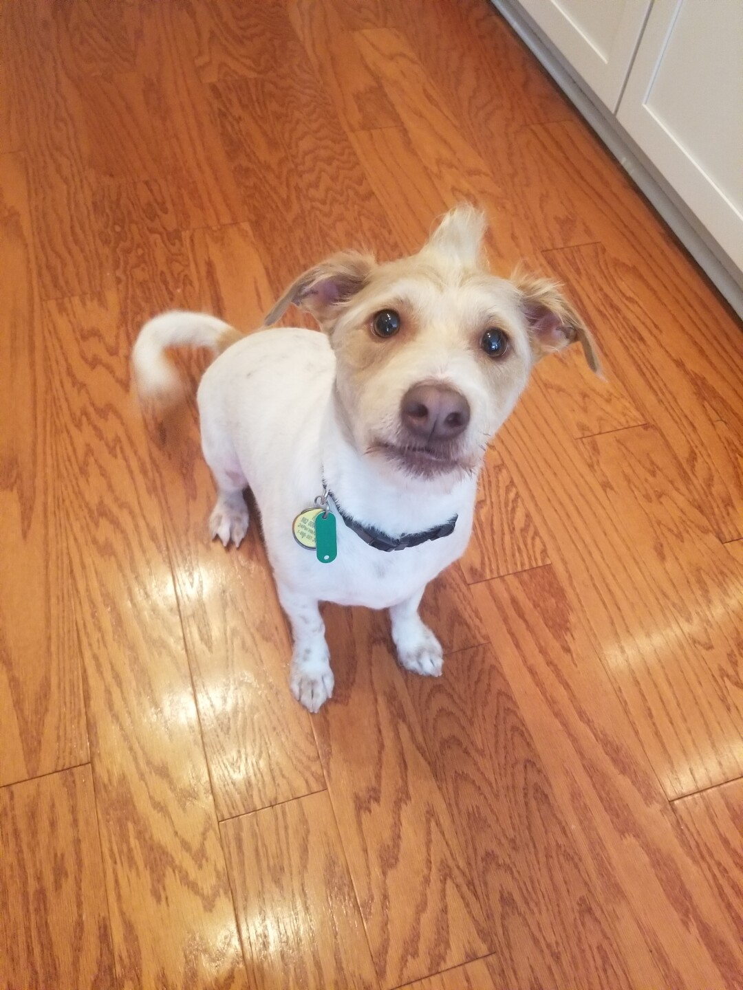 Callaway! He's 3 years old and was a rescue!.jpg