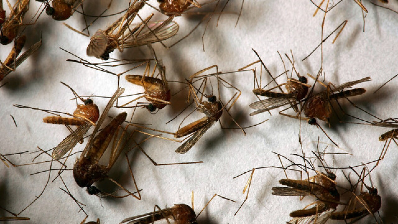 Mead resident is first human West Nile Virus case in Colorado this year