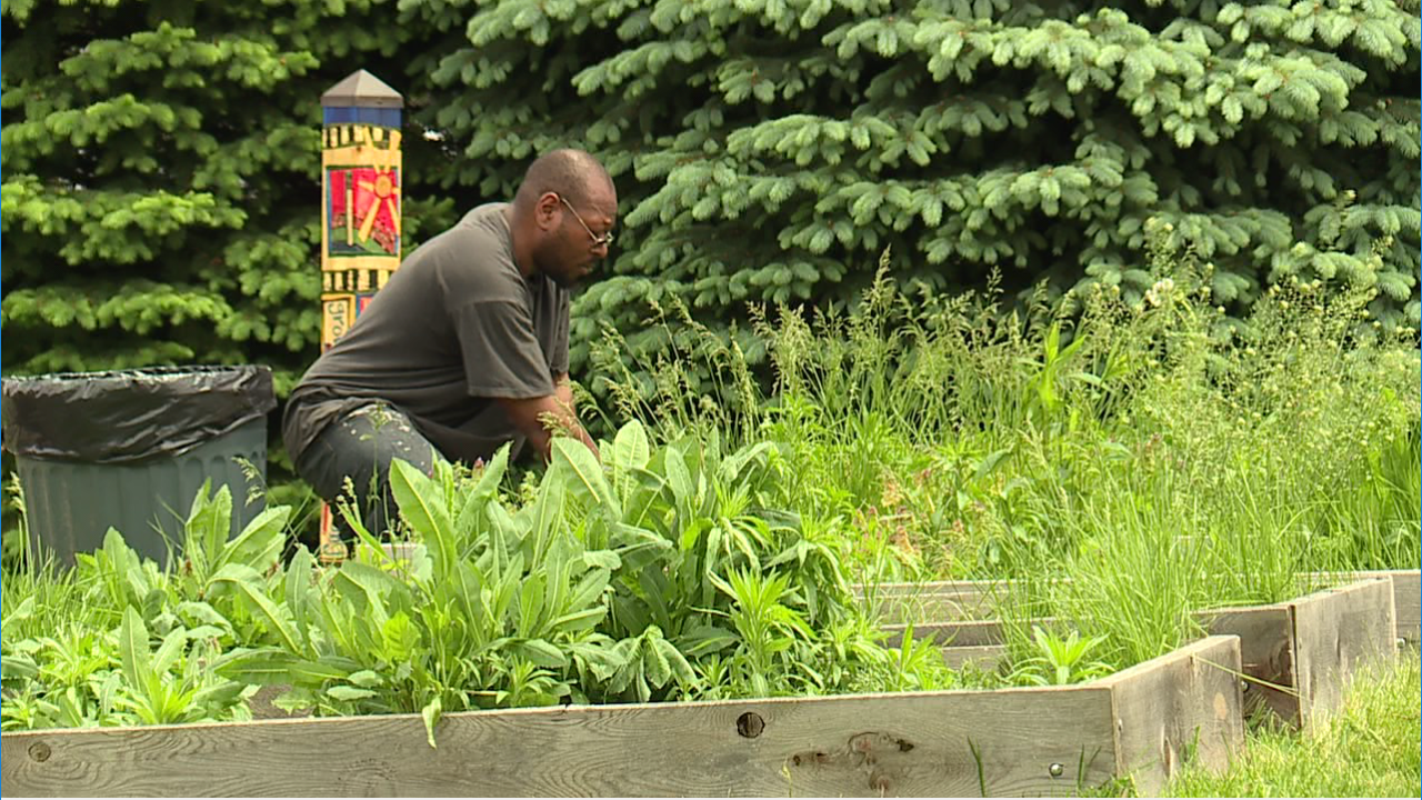 The Cleveland Roots Garden Manager works on a community garden bed