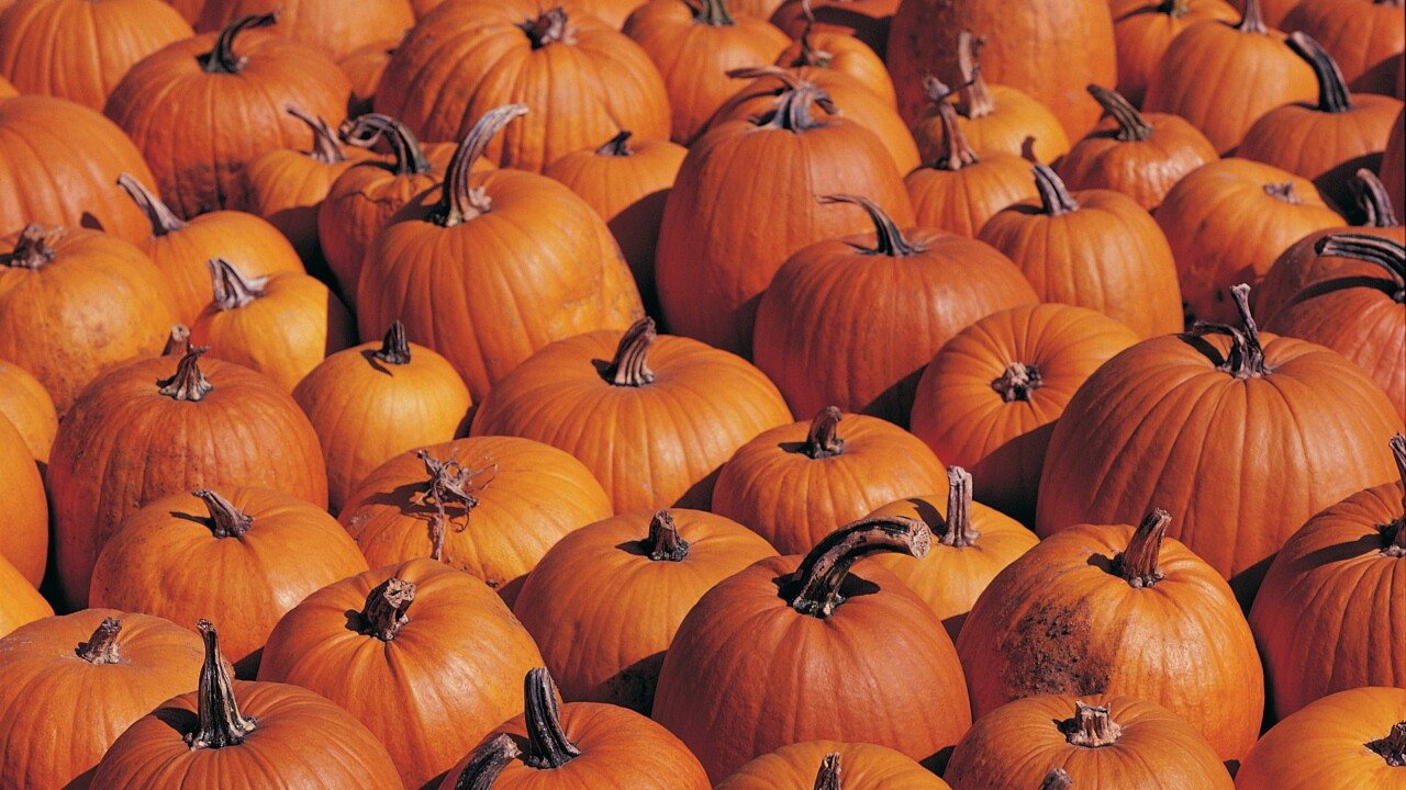 The pumpkin crop has arrived at local farms. Here's how to pick the right one forcarving.