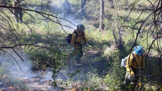 COVID-19 keeps Lolo National Forest from prescribed burns