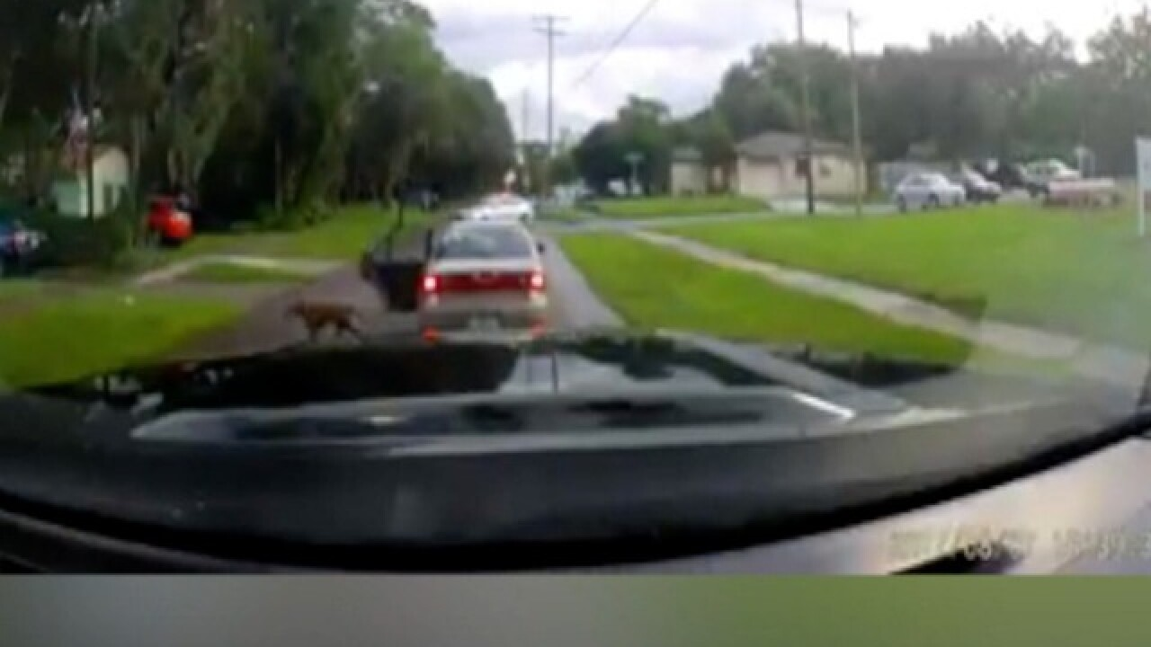 WATCH | Dashcam captures dog being abandoned
