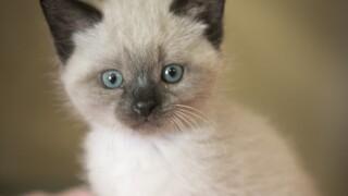 Kitten-SDHS.JPG