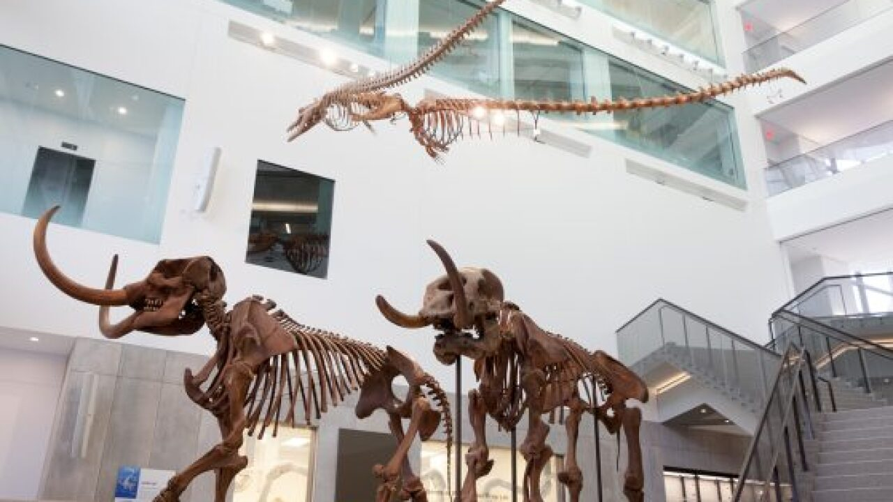 U-M Museum of Natural History set to open its doors on April 14th