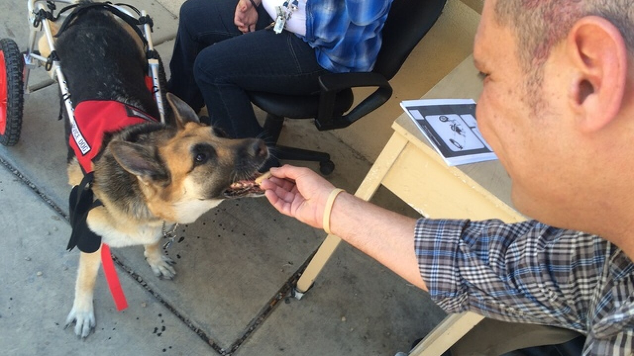 Service dog receives donated wheelchair