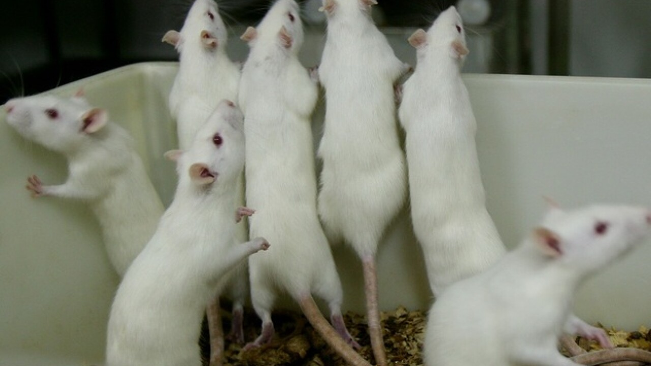 Scientists say they have reversed Alzheimer's disease in mice