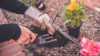 Gardening generic.jpg