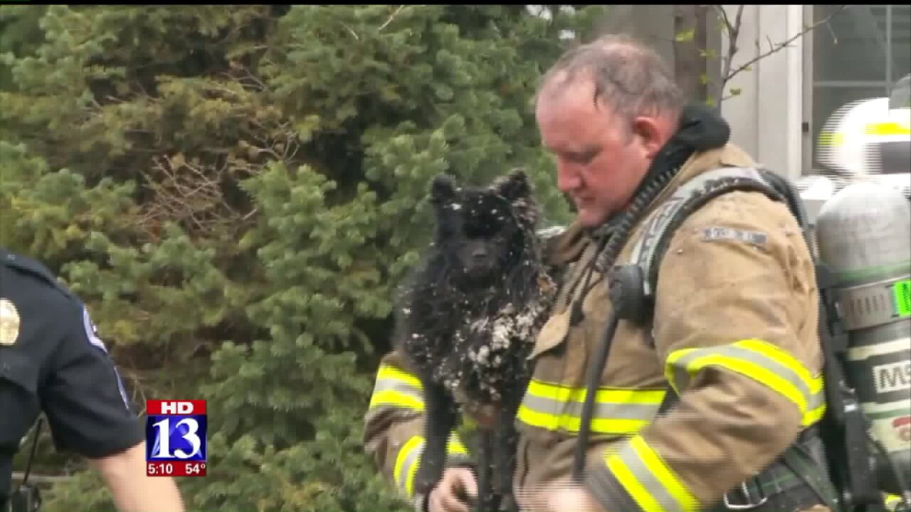 Firefighters rescue pair of pets from house fire in SouthJordan