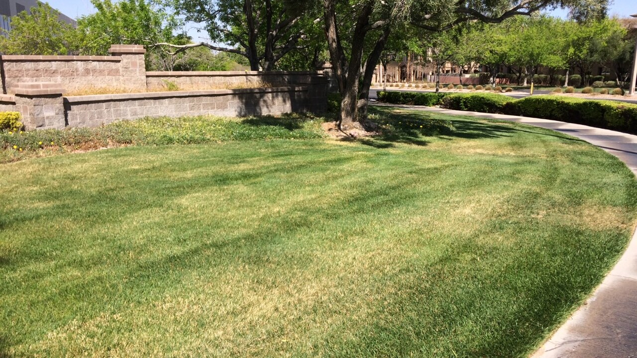 Southern Nevada Water Authority proposes banning unused turf