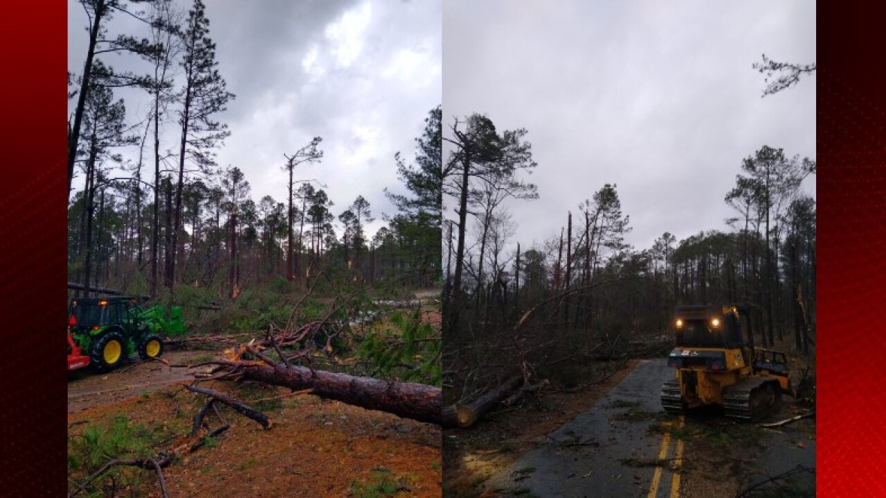 Kisatchie Forest damage.jpg