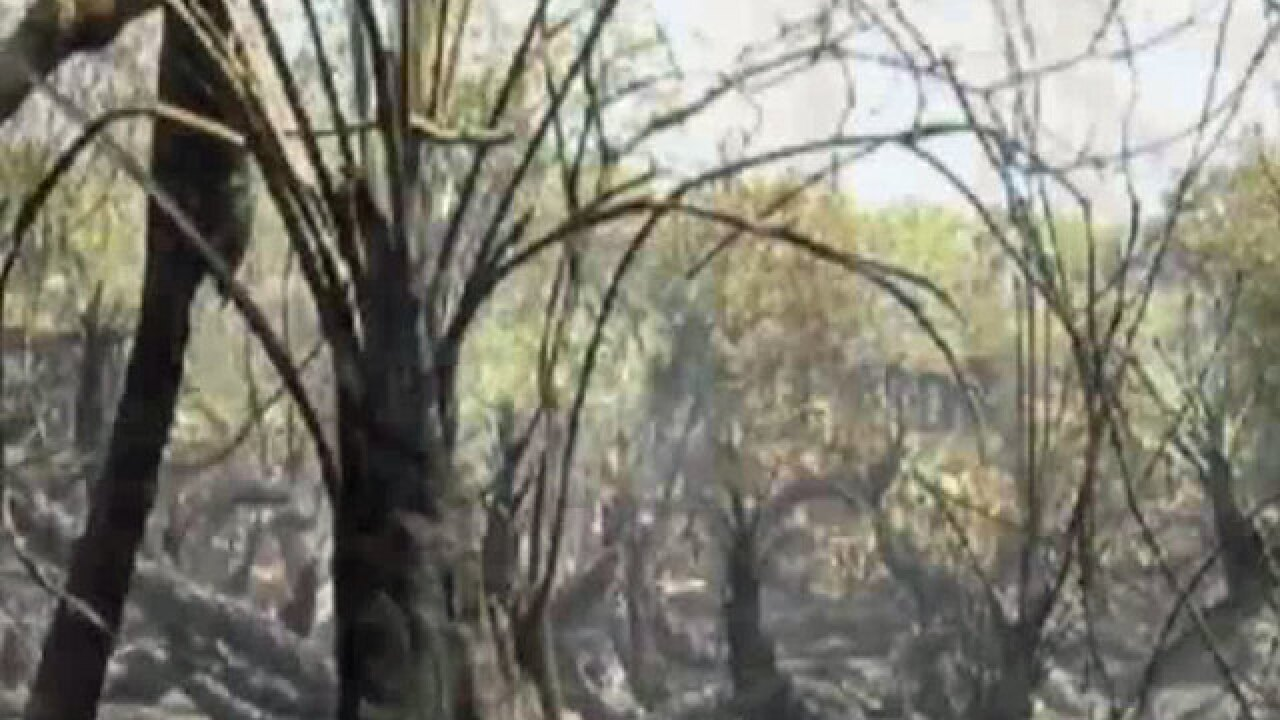 Dry season in Florida: Clear out dead vegetation to prevent wildfires