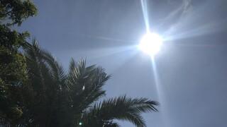 sunshine palm tree 1
