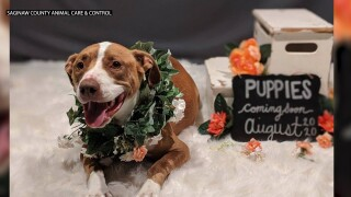 Shelter dog gets maternity photo shoot
