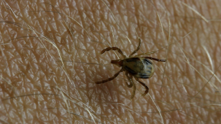 Tick-borne disease cases are on the rise, here's how to prevent them