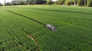 pursuit ends in bean field 1.jpg