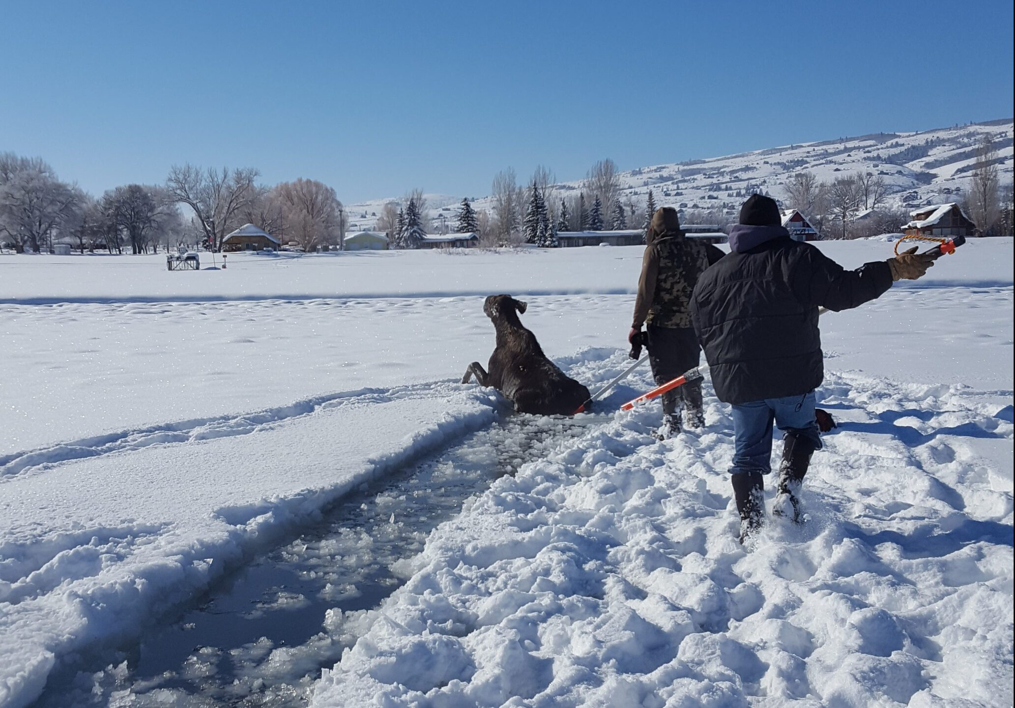 Photos: Moose rescued from ice at Bear Lake