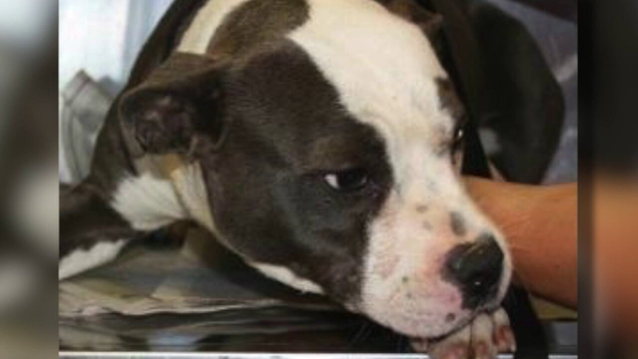 Virginia man admits to setting his dog onfire