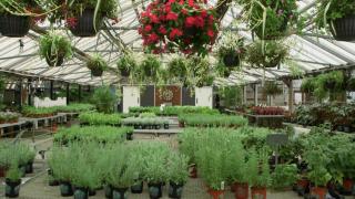 benkens-greenhouse.jpg