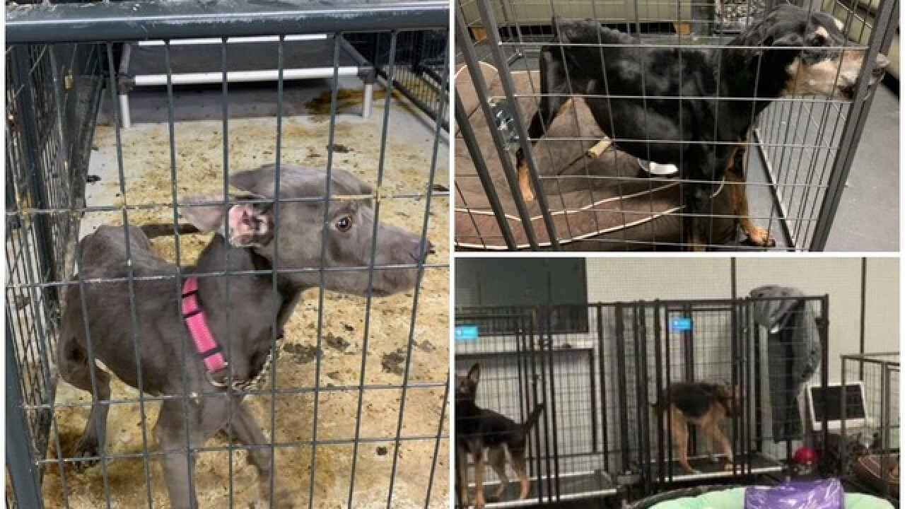 MCSO investigating reports of malnourished dogs