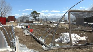 Peyton farm continues to rebuild three weeks after bomb cyclone
