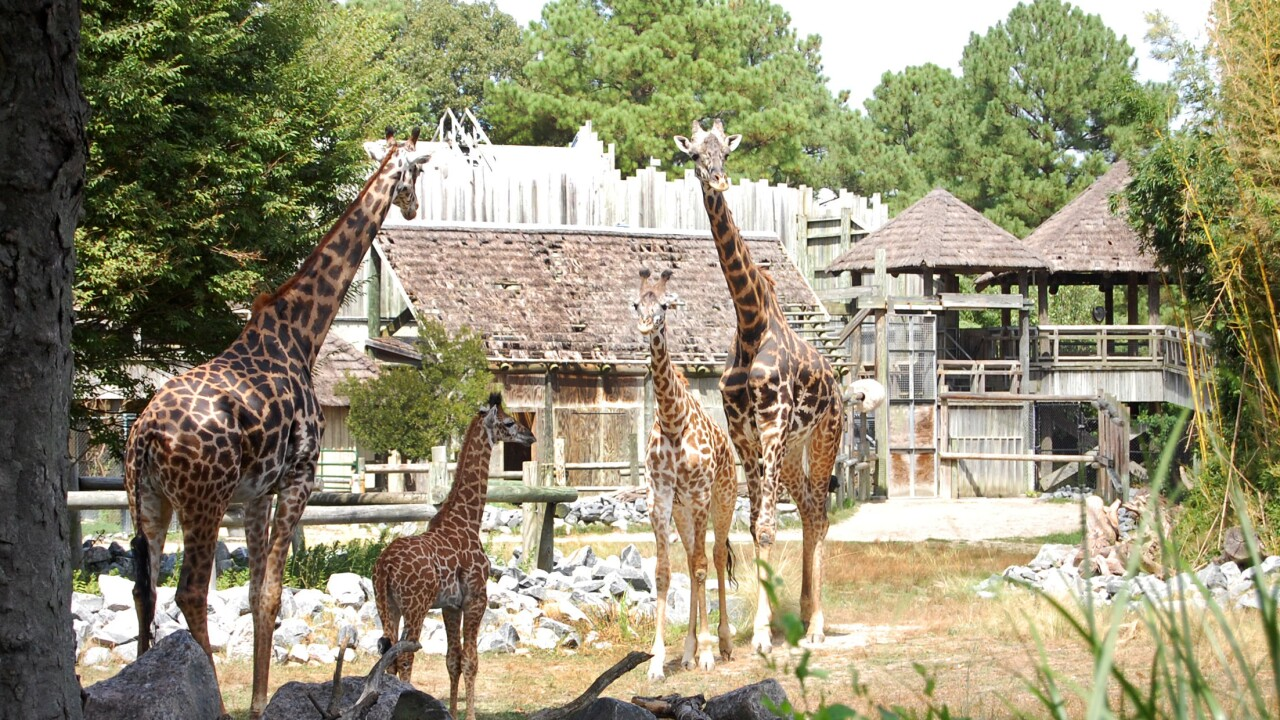 Virginia Zoo offering half off admission to Hampton Roads residents