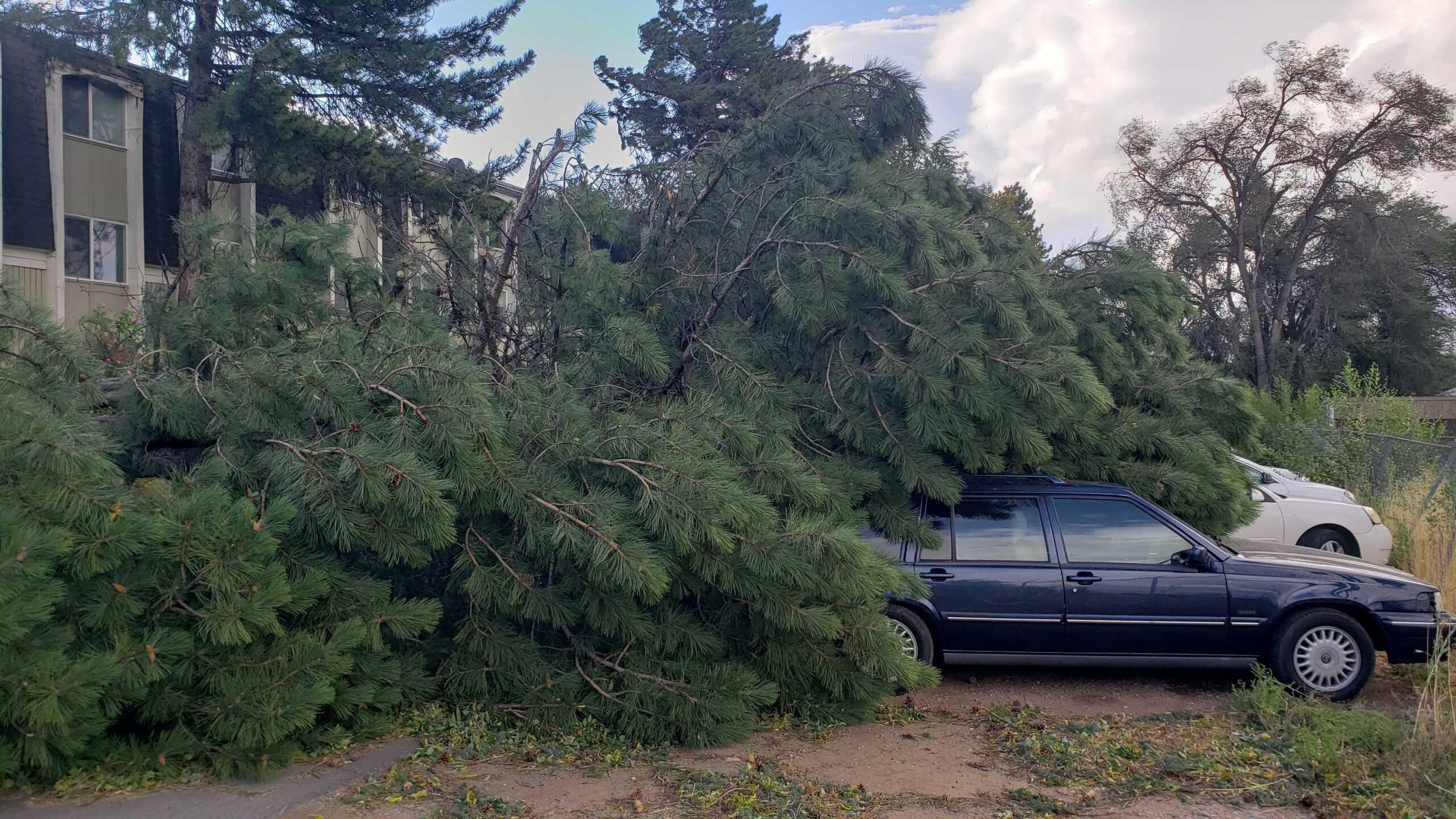 Wind Damage in Ogden (4).jpg
