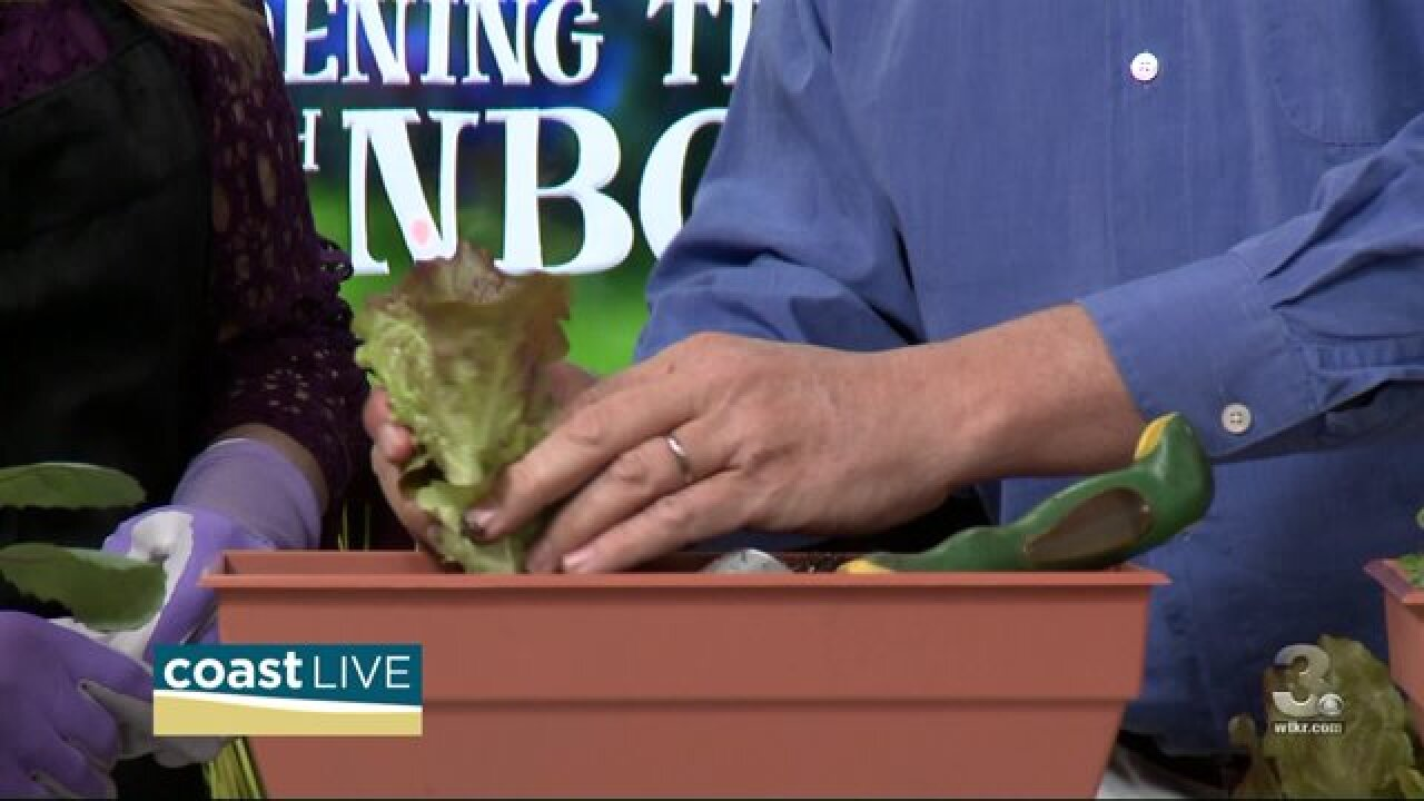 Gardening tips for small spaces and containers on Coast Live