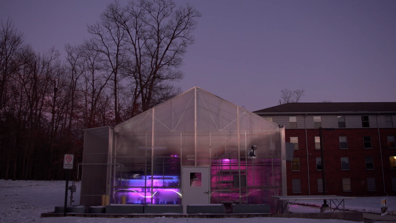 On the campus of George Mason University in Virginia, people can walk by the greenhouse on campus and see the Arcadia installation. In the evening, the lights from Arcadia illuminate the interior.