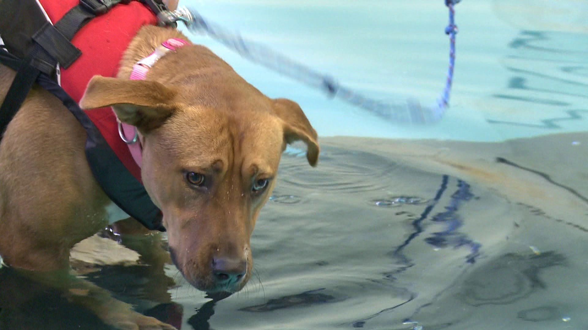 Photos: Richmond shelter dogs to take swim lessons