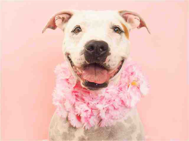 Adoptable pets from Arizona Humane Society and Maricopa County Animal Care (7/25)