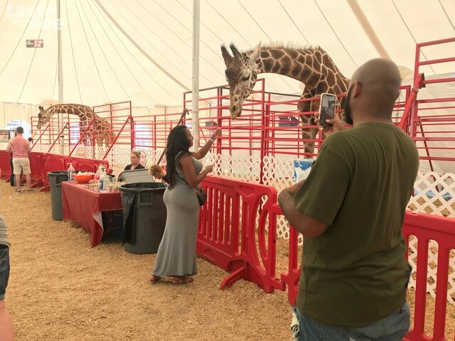 PHOTOS: Animals & livestock at the Florida State Fair