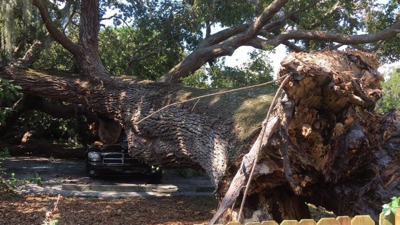 Giant tree falls on car and home in Clearwater
