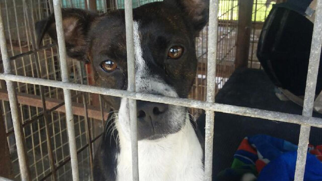 Animal Shelter may have to euthanize animals in Glades County