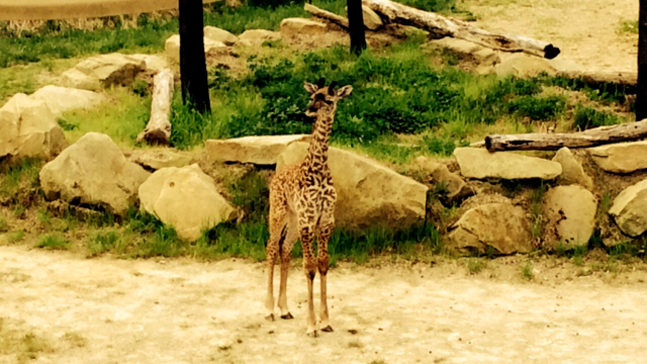 Get into the Cincinnati Zoo for just $1 today