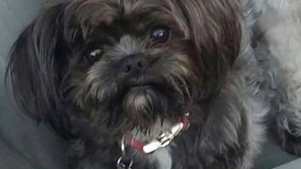 Pet Dogs Disappearing In Hands Of Organized Theft Ring